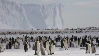 Emperor penguines, Antarctica, undated/British Antarctic Survey, BBC News
