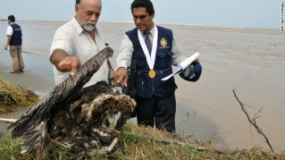Guillermo Boigorria and Lev Castro inspect dead bird in Peru, undated/AFP, Getty, cnn.com