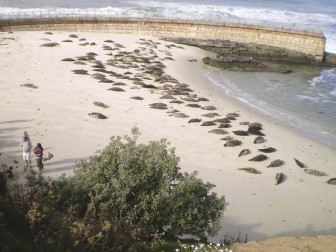Seals occupy Children's Pool Beach, La Jolla, CA, undated/Tony Perry, Los Angeles Times