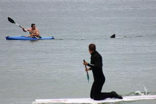 Great white follows Walter Szulc Jr. off Nauset Beach, Orleans, MA, July 7, 2012/Shelly Negrotti, AP, CSMonitor.com