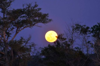Supermoon rising, Bruswick, GA, March 19, 2011/Brad Ervin, space.com