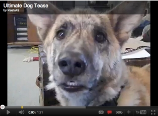 Ultimate Dog Tease, uploaded by klaatu42, May 1, 2011/youtube.com