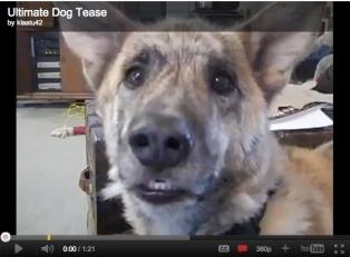 Ultimate Dog Tease, uploaded by klaatu42, May 1, 2011/youtube.com