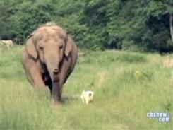Tarra & Bella, Elephant Sanctuary near Nashville, undated /CBS News