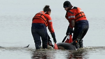 Rescuers use sling to lift dolphin stranded on a mud flat in Wellfleet, MA, Feb 14, 2012/AP, CBS News