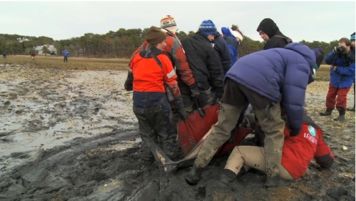 "Team member slips and falls while hauling dolphin out of mud, Cape Cod, MA, Jan-Feb 2012/Image from ""IFAW Marine Mammal Rescue & Research,"" IFAW.org"