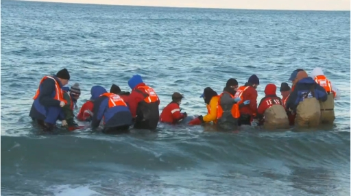 "Rescuers carry dolphins past surf in final phase of journey back to the sea, Cape Cod, MA, Jan-Feb 2012/Image from ""Dolphin Mass Stranding, Cape Cod, MA, Jan-Feb 2012,""  IFAW.org"
