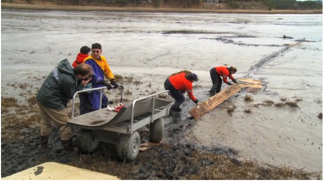 "IFAW rescuers improvise plank to reach dolphin trapped in mud, Cape Cod, MA, Jan-Feb 2012/Image from ""IFAW Marine Mammal Rescue & Research,"" IFAW.org, vimeo.com"