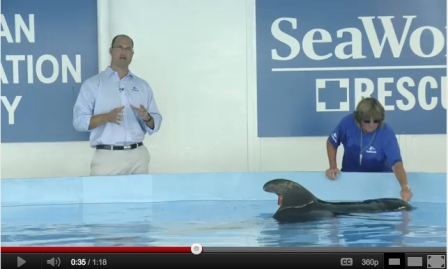 SeaWorld head vet Chris Dold with 301 and trainer, SeaWorld Orlando, July 28, 2011/SeaWorld, youtube.com