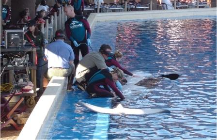 5 Disturbing Facts About SeaWorld's Captive Breeding Program