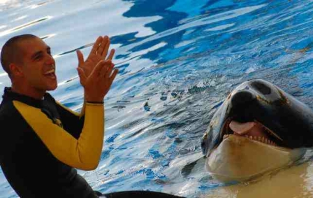 Alexis Martinez & unidentified killer whale, Loro Parque, undated/abc.es