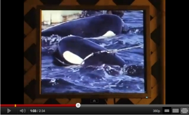 SeaWorld orca capture, Puget Sound, August 1971/Shalesta, youtube.com