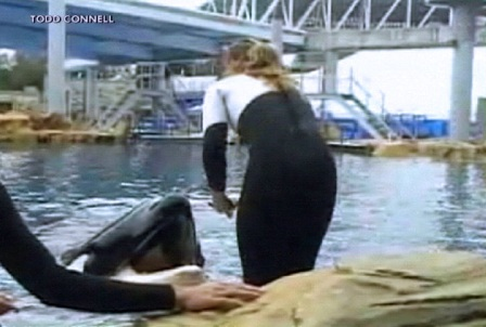 Dawn Brancheau and Tilikum moments before her death, SeaWorld Orlando, Feb 24, 2010/Todd Connell, cfnews13.com