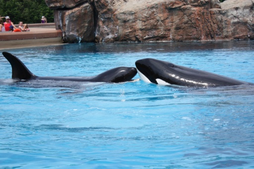 Ike (left) & Kiska, Marineland of Canada, Niagara Falls, CA, July 2011/thestar.com