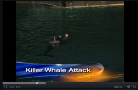 Kasatka grabs Ken Peters, SeaWorld San Diego, Nov 29, 2006/CBS News, cbsnews.com