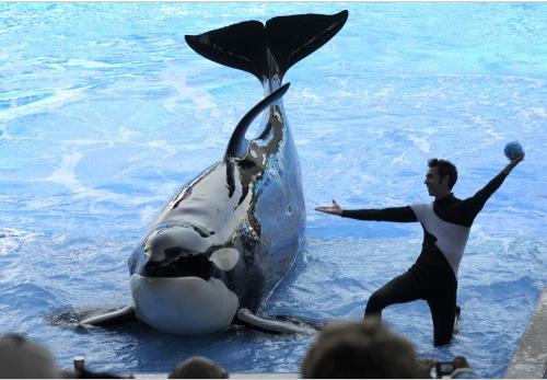 Kayla & trainer Joe Sanchez, SeaWorld Orlando, undated/AP, 90.9 wbur, onpoint.wbur.org