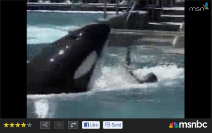 Ky gets rough with trainer Steve Aibel, SeaWorld San Antonio, July 26, 2004/msnbc, bing videos