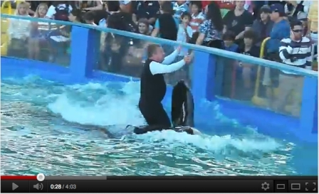 Trainer rides on Lolita's belly, Miami Seaquarium, Dec 28, 2011/volainge09, YouTube.com