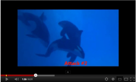 Morgan, Kohana & Skyla, Loro Parque, Dec 2011/withoutmethereisnou, youtube.com