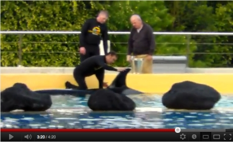 Trainers & Loro Parque owner Wolfgang Kiessling examine Morgan's dorsal fin, Tenerife, Dec 21, 2011/occupyloroparque, youtube.com