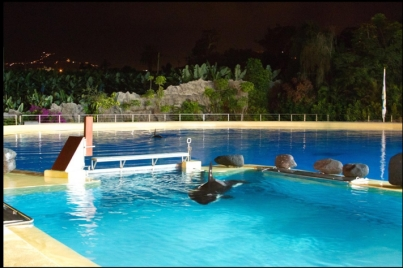 Morgan swims in an enclosure at Loro Parque, Tenerife, Canary Islands, Nov 29, 2011/HO, Loro Parque, AP, huffingtonpost.com