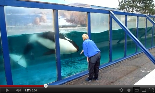 Morgan & caretaker, Dolfinarium Harderwijk, Netherlands, October 2011/hanscocreator, youtube.com