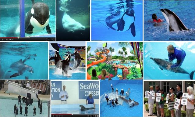 1: Morgan, Imaq, Ikaika, Lorelai. 2: Mattie & Bliss, Once Ocean, Aquatica, Atlantic spotted. 3: Keet, Pilot whale 301, Argo, PETA Protest.