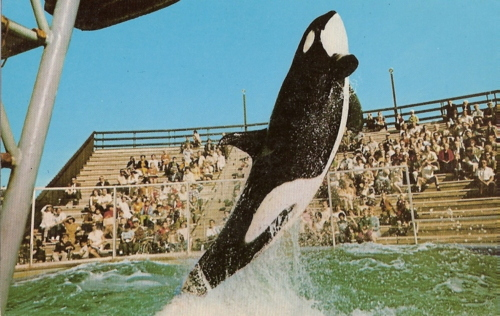 Original Shamu, SeaWorld San Diego, undated/Shamufan88, flickr, obitoftheday.com
