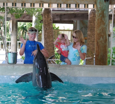 Unidentified rough-toothed dolphin, trainer and visitors, Gulf World Marine Park, undated/gulfworldmarinepark.com