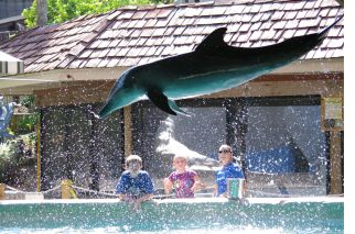 Rough-toothed dolphin, trainer and visitors, Gulf World Marine Park, undated/gulfworldmarinepark.com