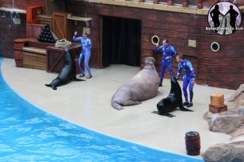 Sea lion show, SeaWorld Orlando, July 2011/Behindthethrills.com