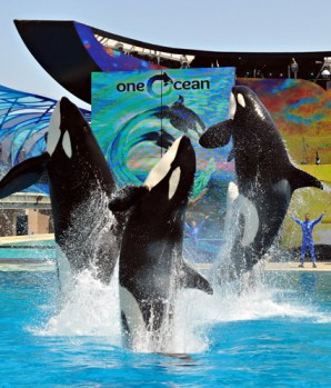 "Unidentified killer whales perform in ""One Ocean,"" SeaWorld San Diego, undated/SeaWorld San Diego, Los Angeles Times"