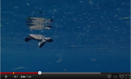 "Image from trailer for ""Turtle: The Incredible Journey,"" SeaWorld Pictures/SeaWorld Pictures, InsideTheMagic, youtube.com"