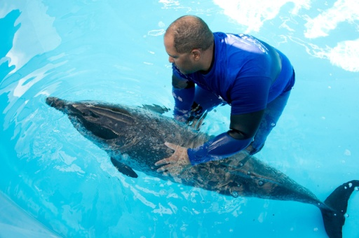 Trainer with female Atlantic spotted dolphin after her arrival at SeaWorld Orlando's Cetacean Rehabilitation Facility, Jan 28, 2012/MyFoxOrlando.com