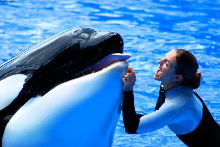 Shana Groves & unidentified orca, SeaWorld San Diego, undated/stracy3-stracy.blogspot.com