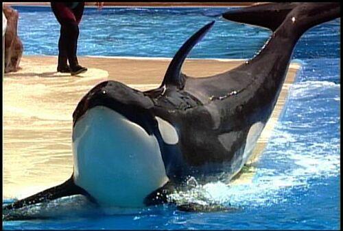 Sumar, SeaWorld San Diego, undated/orcahome.de, Los Angeles Times, latimesblogs.latimes.com
