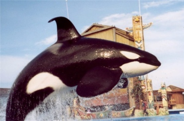 Ulises, location & date unknown/TanyaGever, Orca News 2006, oocities.org