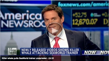"Bill Hemmer discusses release of 2006 SeaWorld orca-attack video on Fox News program ""America's Newsroom,""July 25, 2012/foxnews.com"