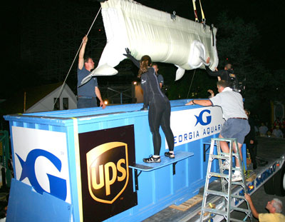 Georgia Aquarium staff load unidentified beluga into transport container, location and date unknown/UPS, howstuffworks.com