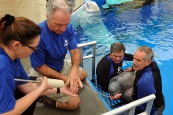 SeaWorld San Diego staffers handfeed Pearl, undated/insideseaworld.com