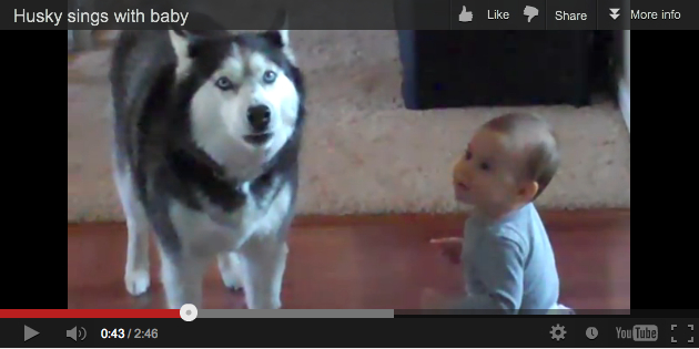 Unidentified husky and baby sing together, undated/k945.com