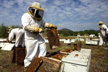 Bees & beekeepers, Big Sky Honey, Bakersfield, CA, undated/ Jim Wilson, The New York Times