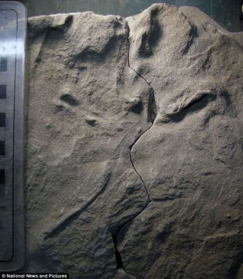 Bird track left in moist sand along riverbank in Australia approximately 105 million years ago/Anthony Martin, Emory University, National News and Pictures, Mail Online