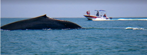 Blue whale off New Zealand, still from video/TVNZ One News