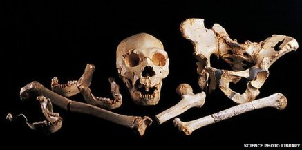 Human fossils from the Pit of Bones near Burgos, Spain/Science Photo Library, BBC News
