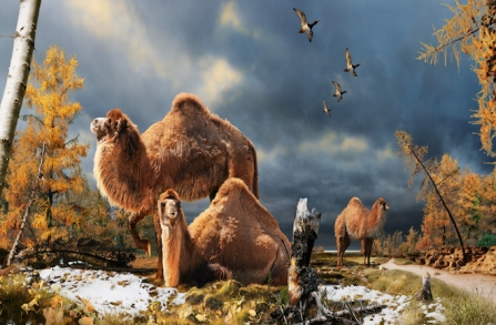 Illustration of large camel that once lived in Arctic regions/Julius Csotonyi, Discovery News