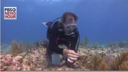 Ken Nedimyer, of Coral Restoration Foundation, inspects dying coral in Florida Keys, undated/PBS.org