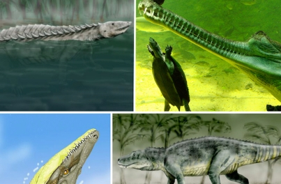 Early crocodiles/Wikimedia Commons, Discovery News