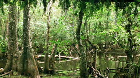 Cypress Forest, location and date unspecified/Fox News Latino