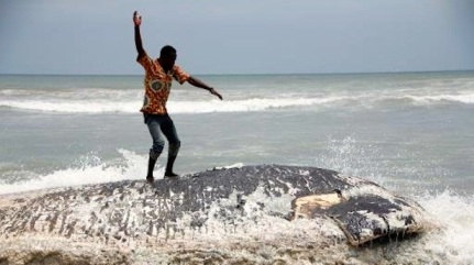 Decomposing whale carcass, western Ghana, undated/AFP, The Raw Story